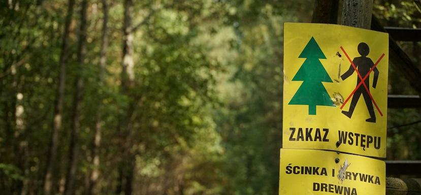 31af11216c864 Przedstawiciele polskiego rządu zadeklarowali, że są gotowi wstrzymać  wycinkę Puszczy Białowieskiej, zgodnie z decyzją Trybunału Sprawiedliwości  UE