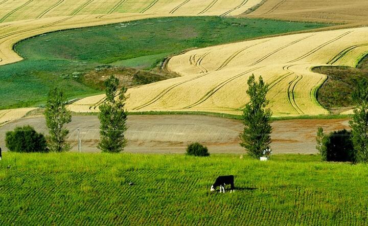 rolnicy z Nowej Zelandii